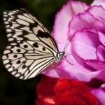 Дом бабочек — бабочка на искусственном цветке