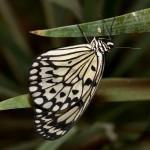Дом бабочек — бабочка
