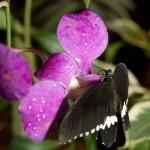 Дом бабочек — бабочка на цветке
