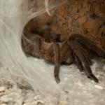 Дом бабочек — паучиха