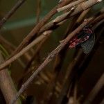 Дом бабочек — бабочка и элемент декора