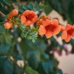 Растительность во дворах