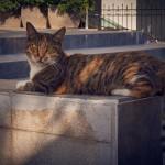 Кошек в Стамбуле больше людей